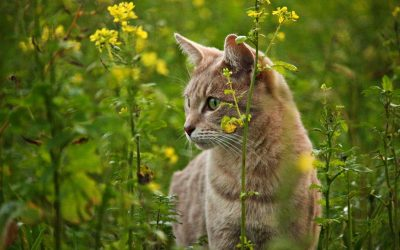Cat Owners – Do Not Buy These 3 Poisonous Plants